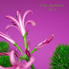Various - Pop Ambient 2014