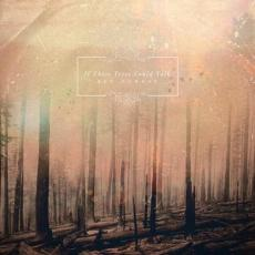 / If These Trees Could Talk - Red Forest